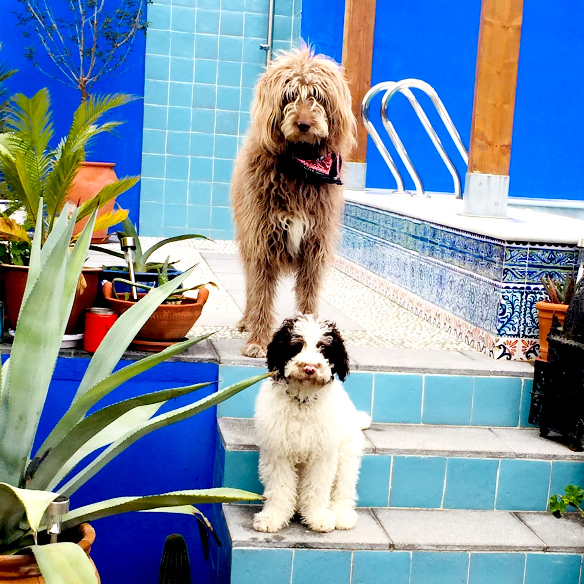 Dogs_Sq